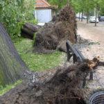 tornado-aus-dem-Boden-gerissene-Baeume